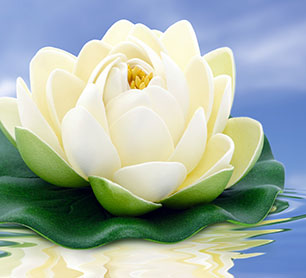 Lotus flower. Recovery & spirituality Los Angeles, CA.